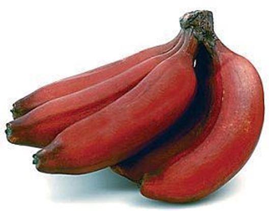 Sevazhai (செவ்வாழை)