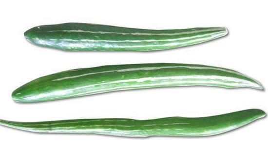 Snake Gourd (புடலங்காய்)