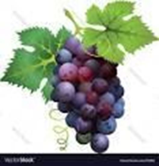 Picture of BLACK GRAPES