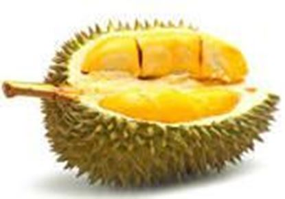 Picture of DHURIAN FRUIT