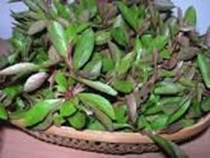 Picture of PONNANGANNI KEERAI(per bunch)