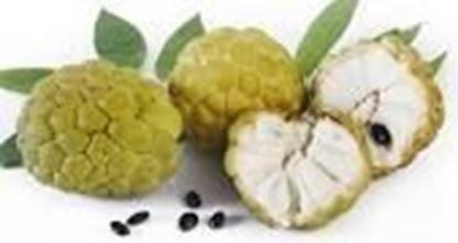 Picture of CUSTARD APPLE