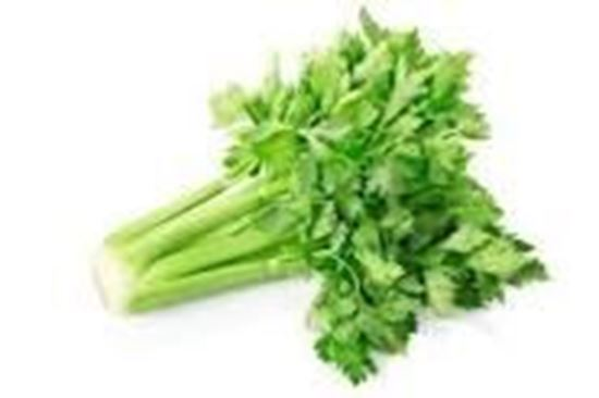 Picture of CELERY