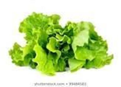 Picture of ICEBERG LETUCE