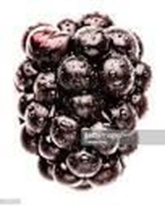 Picture of BLACK BERRY