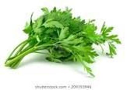 Picture of PARSLEY