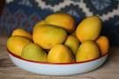 Picture of KALAPAAD MANGO