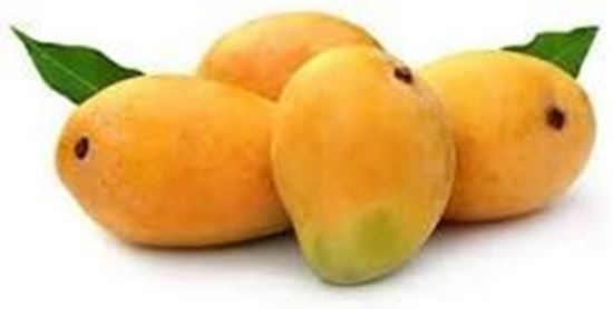 Picture of ALPHONSA MANGO