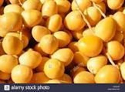 Picture of YELLOW DATES