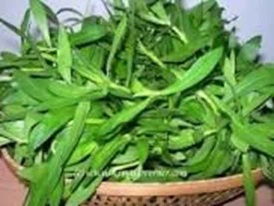 Picture of PANNAI KEERAI(per bunch)