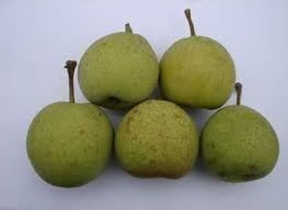 Picture of IMPORTED PEARS RED